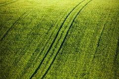 Πράσινος τομέας σίτου με τις διαδρομές Στοκ Εικόνες