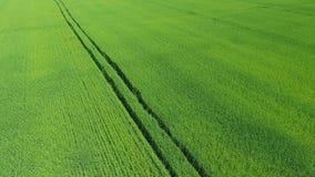 Πράσινος τομέας 2 σίτου απόθεμα βίντεο