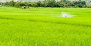 Πράσινος τομέας στην Ταϊλάνδη Στοκ Φωτογραφίες