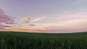 Πράσινος τομέας στο ηλιοβασίλεμα απόθεμα βίντεο