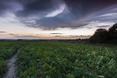 Πράσινος τομέας συγκομιδών με τα θυελλώδη σύννεφα υπερυψωμένα Στοκ εικόνα με δικαίωμα ελεύθερης χρήσης