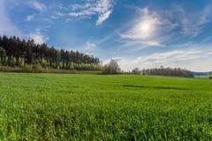 Πράσινος τομέας της χλόης και του μπλε ουρανού άνοιξη Στοκ Φωτογραφία