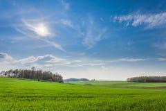 Πράσινος τομέας της χλόης και του μπλε ουρανού άνοιξη Στοκ Εικόνες