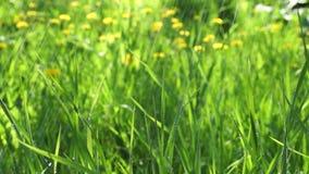 Πράσινος τομέας χλόης κάτω από τη θερινή βροχή απόθεμα βίντεο