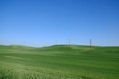 Πράσινος τομέας χλόης ή σίτου Στοκ Εικόνες