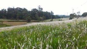 Πράσινος τομέας yai Khao Στοκ φωτογραφίες με δικαίωμα ελεύθερης χρήσης