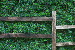 πράσινος του τοίχου φύσης Στοκ φωτογραφίες με δικαίωμα ελεύθερης χρήσης