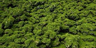 Πράσινος τρισδιάστατος βράχων που διευκρινίζεται Στοκ εικόνα με δικαίωμα ελεύθερης χρήσης