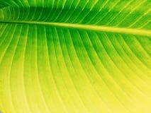 Πράσινος τροπικός στενός επάνω φύλλων Στοκ φωτογραφίες με δικαίωμα ελεύθερης χρήσης