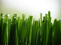 πράσινος υγρός χλόης Στοκ φωτογραφία με δικαίωμα ελεύθερης χρήσης