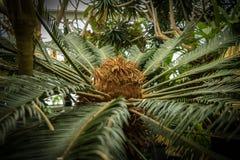 Πράσινος φοίνικας κήπων Στοκ Φωτογραφίες