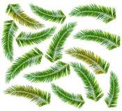 Πράσινος φοίνικας μερών που απομονώνεται στο άσπρο υπόβαθρο Στοκ Εικόνες