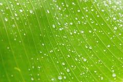 πράσινος φοίνικας φύλλων ανασκόπησης Στοκ εικόνα με δικαίωμα ελεύθερης χρήσης