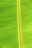 πράσινος φοίνικας φύλλων ανασκόπησης Στοκ φωτογραφία με δικαίωμα ελεύθερης χρήσης