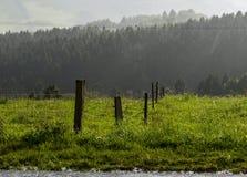 Πράσινος φράκτης λιβαδιών, δάση μετά από τη θύελλα Στοκ Εικόνες