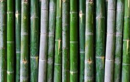 Πράσινος φράκτης μπαμπού Στοκ εικόνες με δικαίωμα ελεύθερης χρήσης