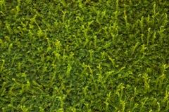 Πράσινος φράκτης Στοκ φωτογραφία με δικαίωμα ελεύθερης χρήσης