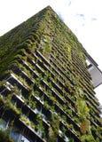 Πράσινος φραγμός πύργων στο Σίδνεϊ Αυστραλία που καλύπτεται στο φύλλωμα Στοκ φωτογραφία με δικαίωμα ελεύθερης χρήσης