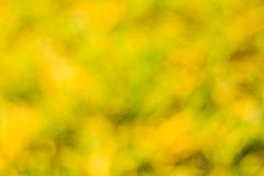 πράσινος φυσικός ανασκόπ&eta Στοκ φωτογραφία με δικαίωμα ελεύθερης χρήσης
