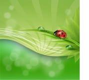 πράσινος φυσικός ανασκόπ&eta Στοκ εικόνες με δικαίωμα ελεύθερης χρήσης