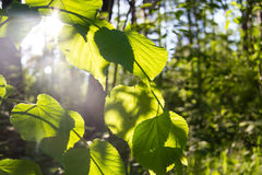 πράσινος φυσικός εκλεκτικός εστίασης ανασκόπησης Στοκ Εικόνες