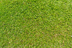 πράσινος φυσικός υπαίθριος χλόης Στοκ Φωτογραφία