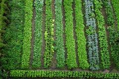 Πράσινος φυτικός κήπος στοκ φωτογραφία με δικαίωμα ελεύθερης χρήσης