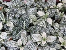 Πράσινος-φύλλα Στοκ Φωτογραφίες