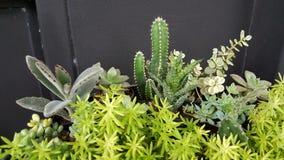 Πράσινος φύλλο και κάκτος και μίνι φυτό Στοκ Φωτογραφία