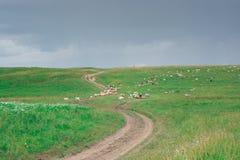 Πράσινος, χλοώδης λόφος Η πορεία, ο δρόμος στο λόφο Θερινή περίοδο στοκ εικόνες