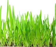 πράσινος χλόης που απομο& στοκ εικόνες με δικαίωμα ελεύθερης χρήσης