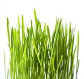 πράσινος χλόης που απομο& στοκ εικόνα με δικαίωμα ελεύθερης χρήσης