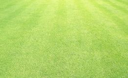 Πράσινος χορτοτάπητας γηπέδων του γκολφ υποβάθρου χλόης Στοκ Εικόνες