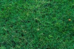 Πράσινος χορτοτάπητας γηπέδων του γκολφ στοκ φωτογραφίες