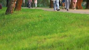 Πράσινος χορτοτάπητας σε έναν χορτοτάπητα πάρκων πόλεων απόθεμα βίντεο