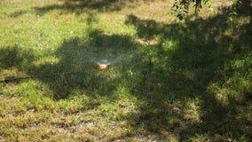 Πράσινος χορτοτάπητας στο πάρκο, στον κήπο που ποτίζεται το πρωί με το νερό Οι ψεκασμοί συστημάτων ποτίσματος ποτίζουν στο χορτοτ απόθεμα βίντεο