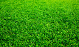 πράσινος χορτοτάπητας Στοκ εικόνα με δικαίωμα ελεύθερης χρήσης
