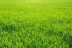 Πράσινος χορτοτάπητας στοκ φωτογραφία με δικαίωμα ελεύθερης χρήσης