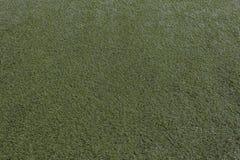 πράσινος χορτοτάπητας Στοκ Εικόνες