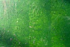 Πράσινος χρωματισμένος τοίχος Στοκ εικόνες με δικαίωμα ελεύθερης χρήσης