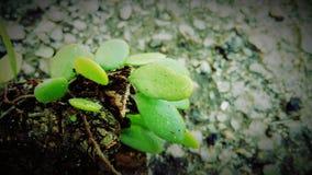 Πράσινος όπως την καρδιά μου Στοκ εικόνα με δικαίωμα ελεύθερης χρήσης