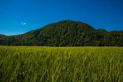 πράσινος λόφος Στοκ Εικόνες