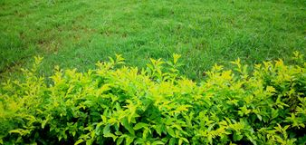 Πράσινος πράσινος στοκ εικόνες με δικαίωμα ελεύθερης χρήσης