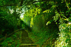 Πράσινος Στοκ Φωτογραφία
