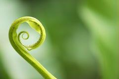 πράσινος Στοκ φωτογραφία με δικαίωμα ελεύθερης χρήσης