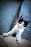 Πράσινος-eyed γάτα Στοκ φωτογραφίες με δικαίωμα ελεύθερης χρήσης