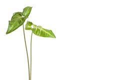 Πράσινος houseplant στοκ φωτογραφίες