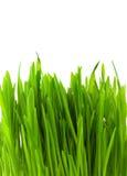 πράσινος pratal χλόης Στοκ φωτογραφία με δικαίωμα ελεύθερης χρήσης