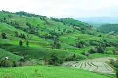Πράσινος terraced τομέας ρυζιού στο χωριό PA bong piang, Chiangmai, Ταϊλάνδη Στοκ εικόνες με δικαίωμα ελεύθερης χρήσης