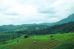 Πράσινος terraced τομέας ρυζιού στο χωριό PA bong piang, Chiangmai, Ταϊλάνδη Στοκ φωτογραφία με δικαίωμα ελεύθερης χρήσης
